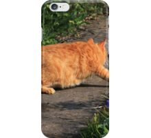 Ginger cat hunting on garden path iPhone Case/Skin