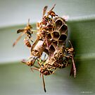 The Industry of Paper Wasps by Mikell Herrick