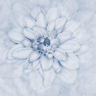 Floral Layers Cyanotype by John Edwards
