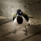 Blue Faced Honey Eater by Julia Harwood