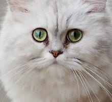 The Green-eyed Cat by Ikramul Fasih