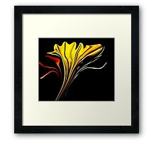 *Tiger Lily Abstract* Framed Print