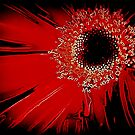 *Red Gerbera Abstract* by DeeZ (D L Honeycutt)