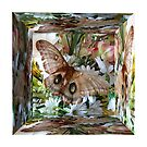 Mirror Box Butterfly by MaeBelle