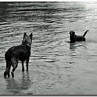 Standoff in the River by Bine