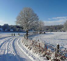 Snowy walk by Andrew Good