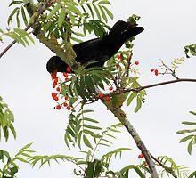 Tasty berries - image 1 of series 3 by missmoneypenny