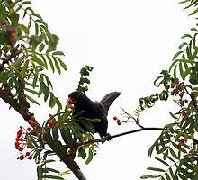 Tasty berries - image 2 of series 3 by missmoneypenny