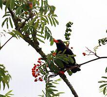 Tasty berries - image 3 of series 3 by missmoneypenny