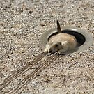 Prairie Clog by Randy Turnbow