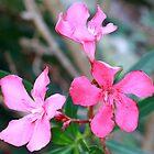 Oleander by AuntDot