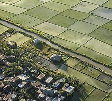 Denpasar Ricefields  by Mieke Boynton