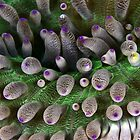 Abstract anemone by David Wachenfeld