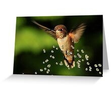 ..TINY BUBBLES....Rufous Hummingbird...by Marie Will Greeting Card