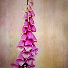 Foxglove by Agnes McGuinness
