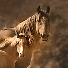 Mare with filly by pdsfotoart