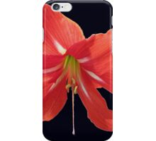 Scarlet Lily on Black Background iPhone Case/Skin