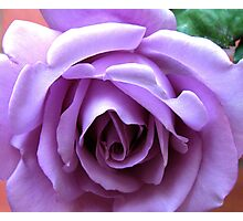 The Heart of a Blue Moon Rose  Photographic Print