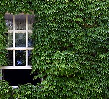 Window on leafy Cotswolds house facade, UK by avresa