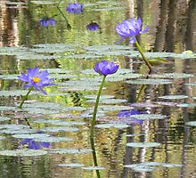 Water Lilies at Cape River by Marilyn Harris