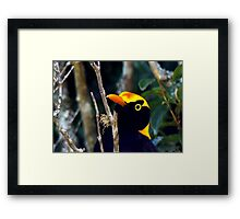Beauty of the Bower Framed Print