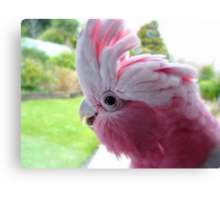 Yipeee! It's Going To Rain...Cockatoo - Rose Breasted/Galah - NZ Canvas Print
