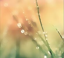 Droplets On Grass With Bokeh by ArtofOrdinary