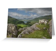 Y Pincin Snowdonia Greeting Card