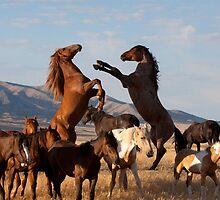 Mustang Clash by Kent Keller