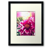 Summer in bloom  Framed Print