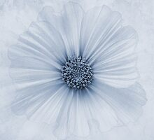 Evanescent Cyanotype by John Edwards