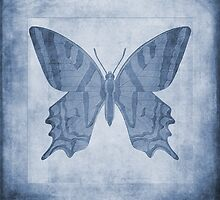 Butterfly Textures Cyanotype by John Edwards