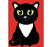 Only One Black and White Cat Photographic Print