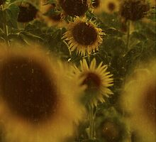 sunflowers by Mantras