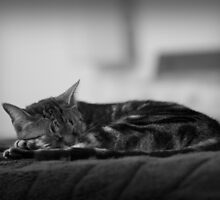 Sleeping cat by psankey