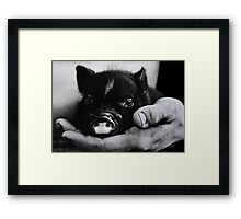 """Piglet in Palm"" Framed Print"