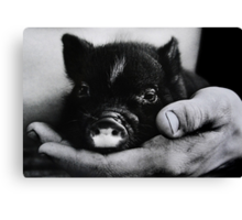 """Piglet in Palm"" Canvas Print"