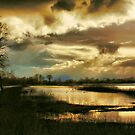 Storm Over the Wetlands by Barbara  Brown