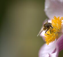 Pollinate by MattMears