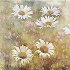 Daisy Dreams by vigor