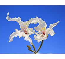 Coffee Bush Purity - Wild Flowers from Africa - Delicate Beauty Photographic Print