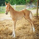 """""""Encore, The Miracle Colt"""" by Melinda Stewart Page"""