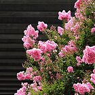 Concrete and Crape Myrtle by Carol Bailey White