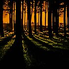Sunset woods by macragraphics