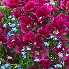 Pink Godetia And Blue Lobelia by Sandra Foster