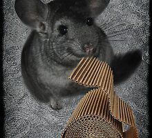 CHINCHILLA (LITTLE CHINCA) NIBBLING CARBOARD AND LOVIN IT PICTURE/CARD by ╰⊰✿ℒᵒᶹᵉ Bonita✿⊱╮ Lalonde✿⊱╮