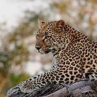 Lounging Leopard  by Vanessa  Warren