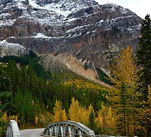 Autumn on the Yoho Valley Rd.  by Ian Houghton