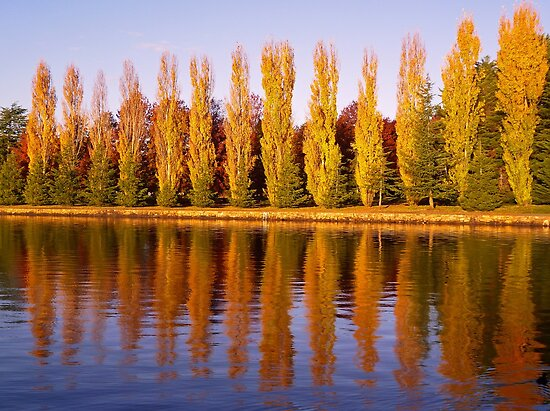 On Golden Pond by TonyCrehan