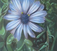 African Daisy by James Potter